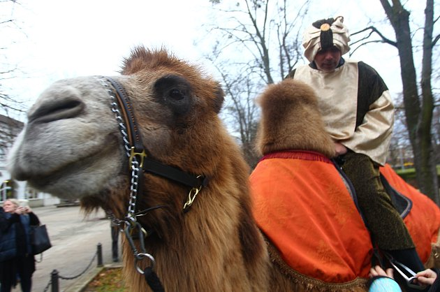 Břeclaví prošel tříkrálový průvod. S velbloudem a lamou.