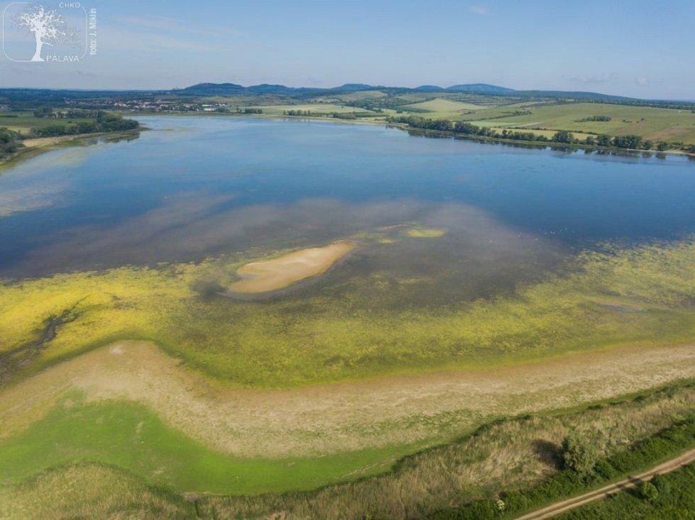 Obnažené břehy rybníka Nesyt.