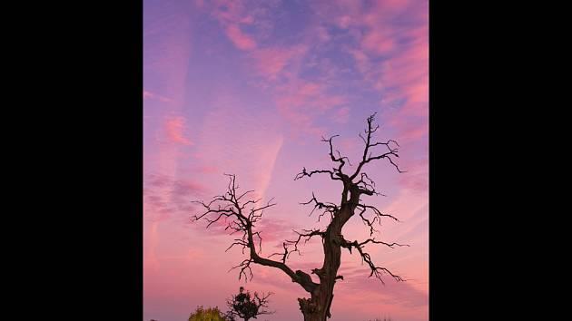 Umělecká díla vznikala díky vzrostlým dubům, které stály na Soutoku mezi Pohanskem a zámečkem Lány. Takhle jeden z nich zachytil fotograf Jan Miklín.