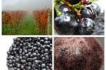 Velkobílovické Vinařství Dalibor Osička vyrábí z hroznů marmeládu. Nejčastěji z Dornfelderu.