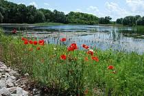 Úvalský rybník patří mezi evropsky významné lokality v rámci soustavy Natura 2000.