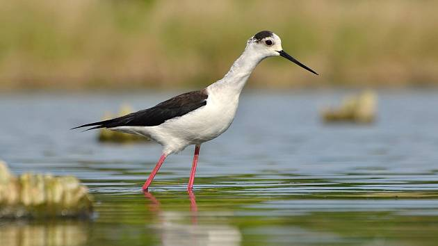 Letnění Nesytu podle ornitologů prospělo živočichům i rostlinám.