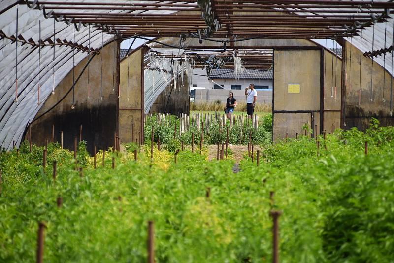 Na chilli farmě v Ladné se v sobotu uskutečnil Den otevřených vrat.