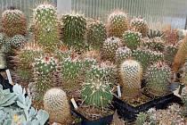 Radimír Knápek z Hustopečí ve svém nově vybudovaném skleníku v současnosti pečuje o několik tisíc kaktusů a sukulentů.