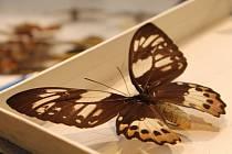 V Břeclavi se konala entomologická výstava.