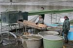 Rybáři společnosti APH -  Rybníky lovili Hlohovecký rybník. Za nevšední výlov na konci března může plánované vypuštění rybníku, které navazuje na loňské letnění nedalekého Nesytu.