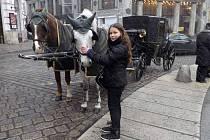 Školáci z Dolních Věstonic se vydali do Vídně, aby si zlepšili němčinu.