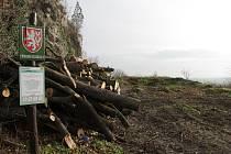 Změnám v Mikulově padly za oběť vzrostlé jasany, pajasany, javory a borovice černé. Bezmála šedesát zdravých stromů.
