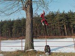 Odborníci ošetřili exotické stromy v Lednicko-valtickém areálu. Byly pro lidi nebezpečné.