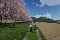 Vizualizace. Na dvě stovky mandloní zkrášlí lán pole pod Kočičí skálou mezi Mikulovem a Klentnicí.