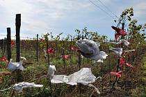 Stovky balónků štěstí popadaly ve čtvrtek v noci na Klentnici a do chráněného území. Pořadatel tvrdí, že se rozloží.