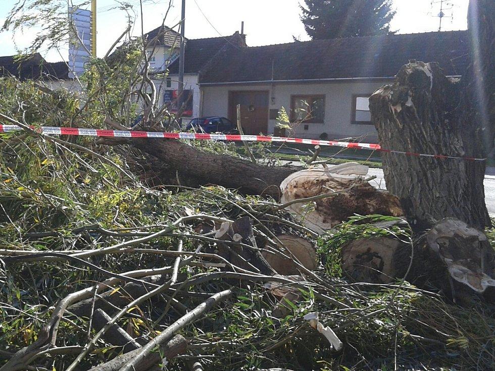 Nápor větru nevydržela vzrostlá vrba u hlavní silnice ve Velkých Bílovicích na Břeclavsku.