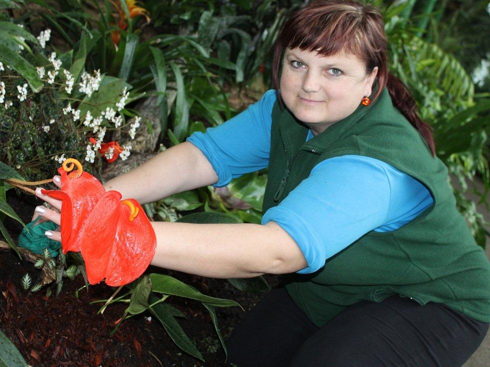 Pracovníci dokončují v zámeckém skleníku v Lednici přípravy na znovuotevření místa turistům.