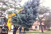 Na návsi ve Strachotíně od soboty stojí vánoční strom.