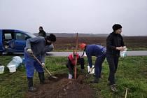Na čtyřiadvacet ovocných stromů starých odrůd vysázeli dobrovolníci u cyklostezky vedoucí z Vranovic do Přibic.