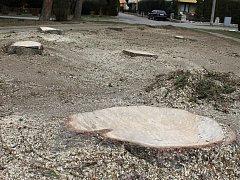 Sedm vzrostlých smrků šlo k zemi na rohu břeclavské Fibichovy ulice.