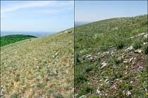 Skalní step na vrcholu Děvín na Pálavě v roce 2012 (vlevo) a v roce 2018 (vpravo).