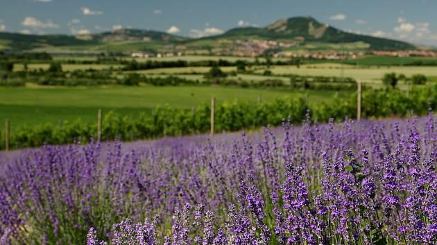Farma ve Starovičkách vyrábí z levandulí různé výrobky.