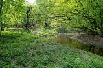 Z výletu k soutoku Dyje s Moravou. Lužní lesy a slepá ramena řek - typický obrázek Soutoku.