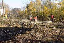 Topoly v havarijním stavu padly k zemi.