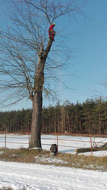 Odborníci ošetřili exotické stromy vLednicko-valtickém areálu. Byly pro lidi nebezpečné.