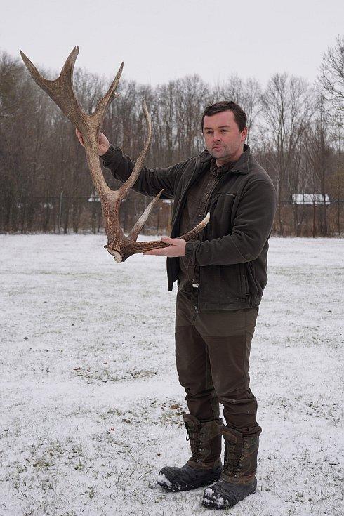 Jeden z prvních shozených jeleních parohů letošní zimy. Osm výrůstků, tedy výsad, ukazuje na šestnácteráka, 16. 2. 2021.