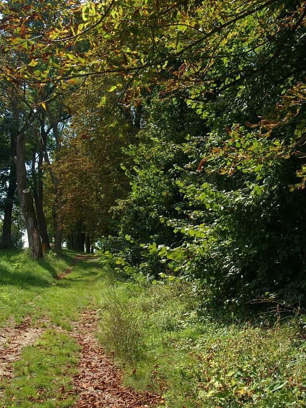 Při procházce okolím Hustopečí se už ke slovu hlásí babí léto.