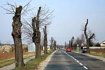 Správa a údržba silnic Břeclav přistoupila k razantnímu ořezu stromů lemujících silnici třetí třídy z Břeclavi do Lednice.