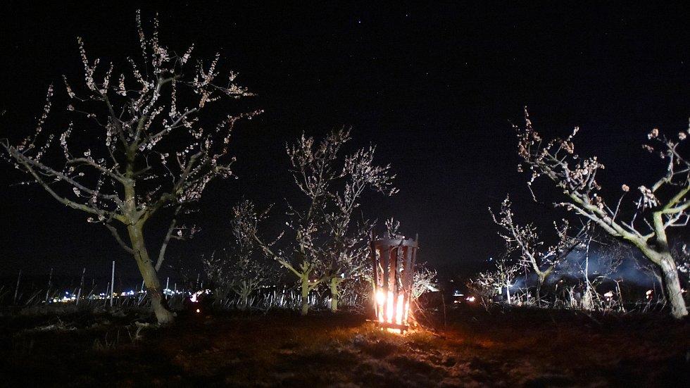 Sadaři na Znojemsku již zapalovali parafínové svíce, aby kvetoucí stromy zachránili. Do sadů se chystají vyrazit i pěstitelé na Břeclavsku.