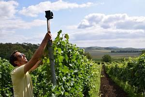 Sklepmistr Aleš Kaspar z Gravitačního vinařství Vilavin v Dobrém Poli začal ve vinohradech s rozmísťováním plynových děl i reproduktorů se skřeky ptáků, které trhají dravci.