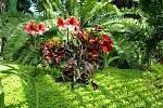 Orchideje, strelicie i banánovník s banány jsou v těchto dnech největšími lákadly v zámeckém skleníku v Lednici.