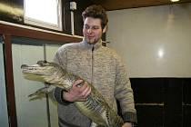 Erik Berousek na každém představení v cirkusu bojuje o život s pěticí krokodýlů.