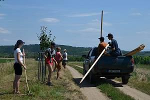 Dobrovolníci z Okrašlovacího spolku Mikulov získali peníze na novou výsadbu stromů. Tentokrát vysadí Povidlovou alej, díky Nadaci Partnerství.