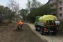 Mikulovští testují speciální vaky k zavlažování mladých stromků.