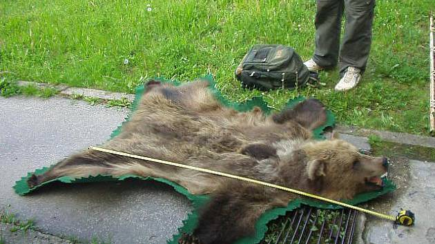 Dvě medvědí kůže s hlavou a dva kusy masa z medvěda hnědého zadrželi celníci na bývalém hraničním přechodu Břeclav – dálnice.