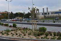 Nové břeclavské parkoviště u nemocnice už je osázené stromy a keři.