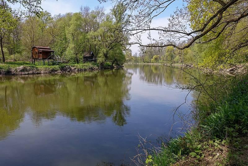 Z výletu k soutoku Dyje s Moravou. Poslední metry řeky Dyje a vlevo rakouské rybářské chaty s obřími sítěmi.