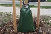Speciální vaky k zavlažování mladých stromků testovali letos i v Mikulově.