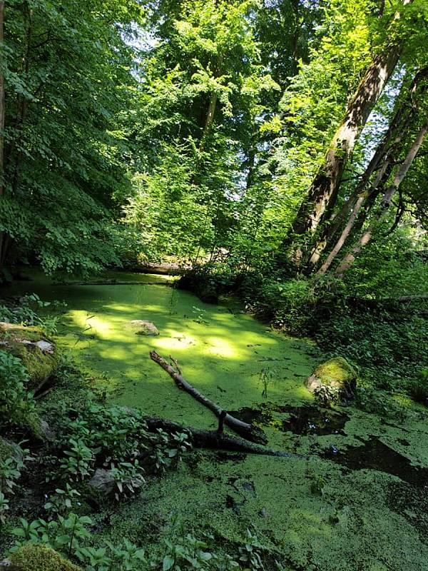 Z výletu do Nových Zámků v Litovelském Pomoraví. Litovelskému Pomoraví vévodí zelená všech odstínů.