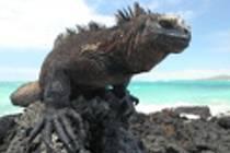 Lidé v kině Koruna odhalí tajemství Galapág.