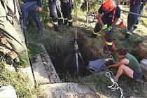 Koně z jímky vytáhli speciálně školení hasiči ve Velkých Hostěrádkách.