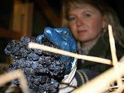 Z půdy vinařství Petra Marcinčáka ve středu dopoledne mizely trsy hroznů po kilech. Podle tajemníka svazu vinařů Martina Půčka jde o unikát, s nímž se dosud nesetkal.