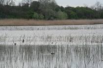 Rybník Nesyt