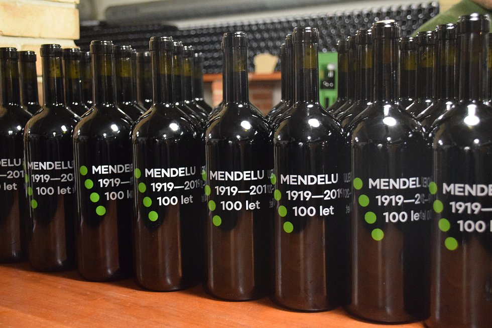 Červené víno odrůdy Cerason v pátek ručně lahvovali na Zahradnické fakultě Mendelovy univerzity v Lednici na Břeclavsku.