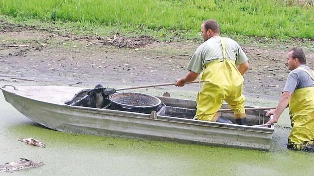 Smutná práce s vylovením desítek kusů uhynulých ryb