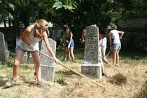 Dobrovolníci téměř z celého světa pracují na židovském hřbitově v Mikulově. Při dvoudenním pobytu se přesunou třeba do národní přírodní rezervace Tabulová hora a přírodní rezervace Turold.