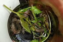 Břeclavští strážníci vypustili hada do přírody.