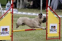 Staré fotbalové hřiště v Sedleci zabrali o víkendu vyznavači psího agility.