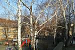Mikulovští budou muset vykácet několik stromů v různých částích města. Foto: město Mikulov