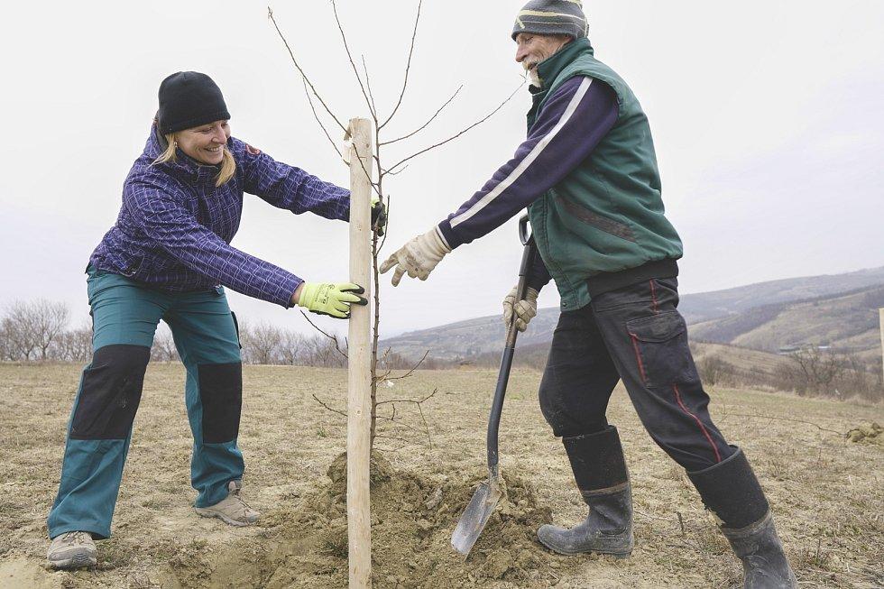 Mandloňové sady v Hustopečích se rozrostly o patnáct nových druhů tohoto stromu. Arboretum u rozhledny má zpestřit návštěvu turistům.